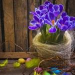Art Easter Egg basket wooden card crocus spring flower feather — Stock Photo #21564511
