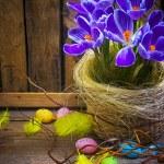 Art Easter Egg basket wooden card crocus spring flower feather — Stock Photo #21564691