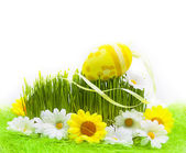 Easter Egg background wooden card spring flower grass — Stock Photo