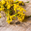 Branches forsythia background spring twig flower — Stock Photo