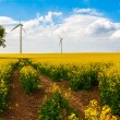 Field wind mill turbines farm landscape rape — Stock Photo