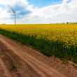 Field wind mill turbines farm landscape rape — Stok Fotoğraf #26148171