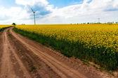 Violación de paisaje de granja de campo viento molino turbinas — Foto de Stock