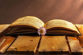 Book daisy open old vintage wooden board flower grunge dirty vin — Stock Photo