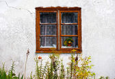 Window old garden view wall wild — Stock Photo