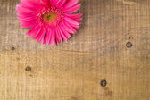 Wood background wooden nature raw boards material flower gerbera — Stock Photo