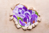 Frame Heart paper border shape flower old — Stock Photo