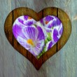 Heart frame border window wooden flower — Stock Photo
