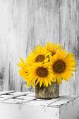 Background still life flower sunflower wooden white vintage — Stock Photo
