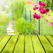 Spring background small garden wooden panel — Stock Photo