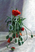 Still life bouquet poppies — Stockfoto