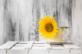 Background still life flower sunflower wooden white vintage cup — Stock Photo