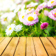Stock Photo: Spring background daisies wooden panel