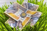 Polish money fresh grass — Stock Photo