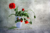 Still life bouquet poppies — Stock Photo