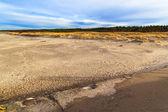 Trawa pokryta wydm nad brzegiem Morze Bałtyckie — Zdjęcie stockowe