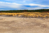 Grass covered dunes shores Baltic Sea — 图库照片
