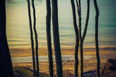 View wooded shore Baltic Sea — Stock Photo