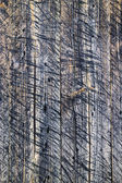 Wall wooden planks painted grey — Stock Photo