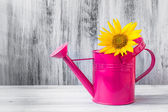 Still life bouquet sunflowers watering can — Stock Photo
