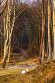 дорога лесом берег моря — Стоковое фото