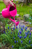 Spring works garden watering plants watering can — Foto Stock