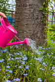 Plant Care Watering spring flowers garden — Stock Photo