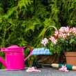 Different tools plants spring garden — Stock Photo #48468641