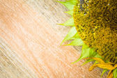 Background flower sunflower seeds wooden countertop — Stock Photo