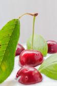 Closeup cherry fruit cream dessert — Stock Photo