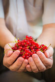 Freshly fruits red currant hands man — Stock Photo