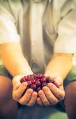 Male hands holding fresh air gooseberry fruit — Stock Photo