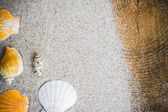 Colorfull Sea shells sand board — Stock Photo