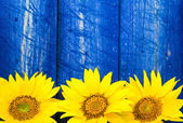Yellow sunflowers painted fence — Stockfoto