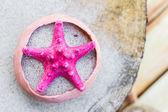 Sea shells sand board — Stockfoto