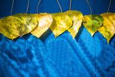 秋の背景の葉黄色青いテーブル — ストック写真