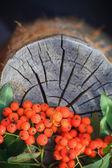 Fall background rowan fruits old stump — Stock Photo