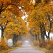 Fall road. — Stock Photo