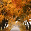 Autumn maple road. — Stockfoto