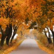 Autumn maple road. — Stock Photo