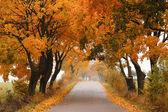 Autumn maple road. — Stock Photo