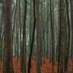 Mixed autumn forest. — Stock Photo