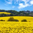 English countryside landscape — Stock Photo