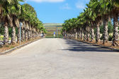 The Palm road — Stock Photo