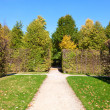 Stock Photo: Park alley