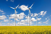 Windturbines farm with rapeseed field — Stock Photo
