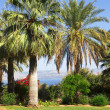 Israel,Sea of Galilee,  Mount of Beatitudes, gardens - Stock Photo
