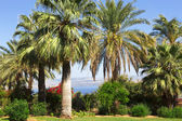 Israel,Sea of Galilee, Mount of Beatitudes, gardens — Foto Stock