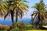Mar da galiléia, monte das bem-aventuranças, jardins — Foto Stock