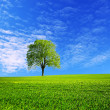 Field and blue sky in spring — Stock Photo